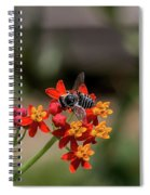 Visor Wearing Bee Pollinates A Colorful Flower Spiral Notebook