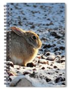 Wabbit Spiral Notebook