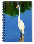 Wading Great White Egret Spiral Notebook