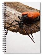 Walking Beetle Spiral Notebook