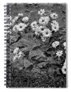 Wallflower Ain't So Bad Bw Spiral Notebook