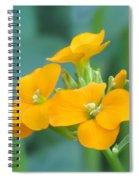Wallflower Orange Spiral Notebook