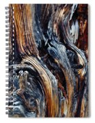 Walnut Canyon Tree Spiral Notebook