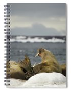 Walruses With Giant Tusks At Arctic Haul-out Spiral Notebook