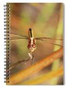 Wandering Glider Dragonfly Spiral Notebook