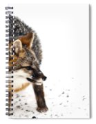 Wary Red Fox Spiral Notebook