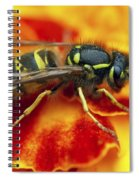 Wasp In The Bloom Spiral Notebook