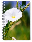 Wasp On A White Flower Spiral Notebook