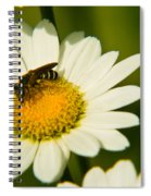 Wasp On Daisy Spiral Notebook