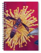 Wasp On Indian Hawthorn Spiral Notebook
