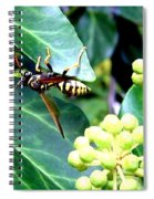 Wasp On The Ivy Spiral Notebook