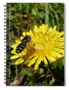 Wasp Visiting Dandelion Spiral Notebook