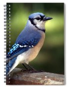 Watchful Blue Jay Spiral Notebook
