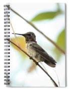 Watchful Hummingbird Spiral Notebook