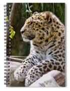 Watching A Shadow Spiral Notebook