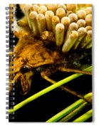 Water Beetle Brooding Eggs Spiral Notebook
