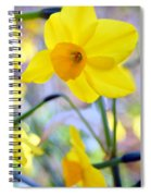 Water Color Daffodil Spiral Notebook