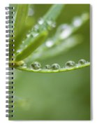 Water Droplets On Evergreen Spiral Notebook