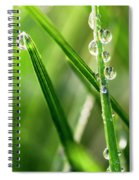 Water Drops On Spring Grass Spiral Notebook