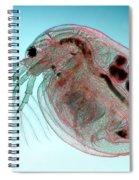 Water Flea Daphnia Magna Spiral Notebook