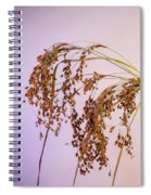 Drooping Teddy Bear Grass Spiral Notebook