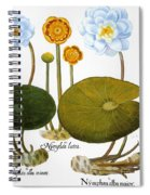 Water Lily, 1613 Spiral Notebook