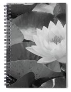Water Lily - Burnin' Love 13 - Bw Spiral Notebook