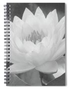 Water Lily - Burnin' Love 15 - Bw - Water Paper Spiral Notebook