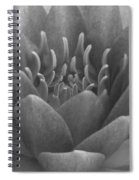 Water Lily Flame Bw Spiral Notebook