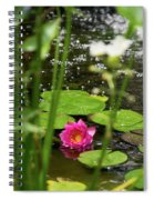 Water Lily In A Pond Spiral Notebook