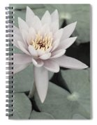 Water Lily In Soft Pink Spiral Notebook