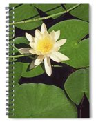 Water Lily I V Spiral Notebook