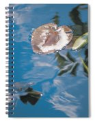 Water Lily Leaves And Reflection Of Clouds In Unknown Lake Spiral Notebook