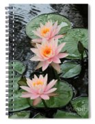 Water Lily Trio Spiral Notebook