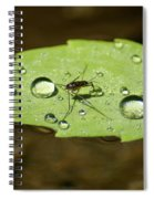Water Strider Has A Drink At The Floating Leaf Cafe Spiral Notebook