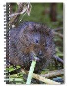 Water Vole A Chomp Spiral Notebook