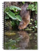Water Vole Spiral Notebook