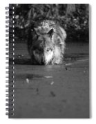 Water Wolf I Spiral Notebook
