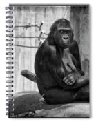 Watercolor Gorilla Spiral Notebook