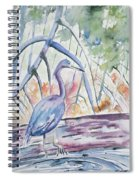 Watercolor - Little Blue Heron In Mangrove Forest Spiral Notebook
