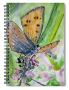 Watercolor - Small Butterfly On A Flower Spiral Notebook