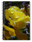 Waterdrops On A Pansy Spiral Notebook