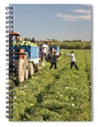 Watermelon Harvest Spiral Notebook
