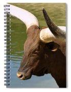 Watusi Bull Spiral Notebook