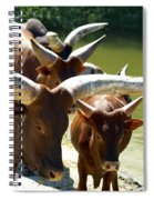 Watusi Cattle Spiral Notebook