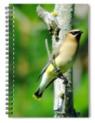 Wax Wing In A Small Branch  Spiral Notebook