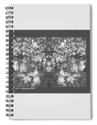 Waxleaf Privet Blooms In Black And White Abstract Poster Spiral Notebook