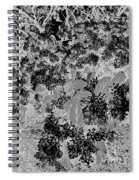 Waxleaf Privet Blooms On A Sunny Day In Black And White - Color Invert Spiral Notebook