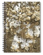Waxleaf Privet Blooms On A Sunny Day In Sepia Tones Spiral Notebook