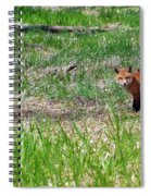 We Are 3 Red Fox Puppies Spiral Notebook